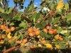 BlushingBerries.jpg