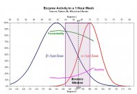 Enzyme Activity in Mash.jpg