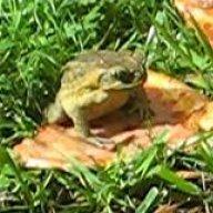 brewfrog