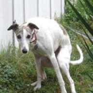 fartingdog