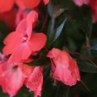 flowerysong