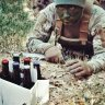 Sergeant Hops