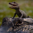 baby-alligators