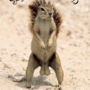 PT_brewery_Squirrely_Ale