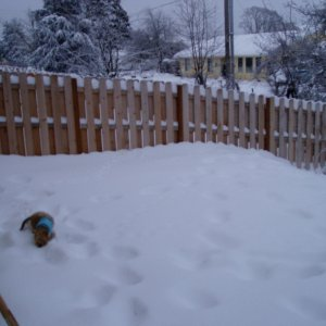 snowalmosthalfwayupthefence