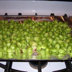 Hops_2009_crop_1
