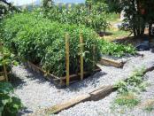 thumb1_garden2-46234