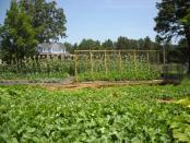 thumb1_garden3-46235