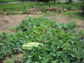 thumb1_garden4-46236