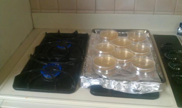 Plating Yeast & Selecting Colonies - jester5120 - 3-314.jpg