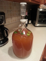 1-gallon-experiment