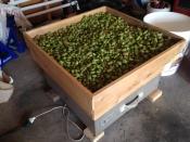 hop-drying-oast