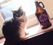 thumb1_brewcat1-64172