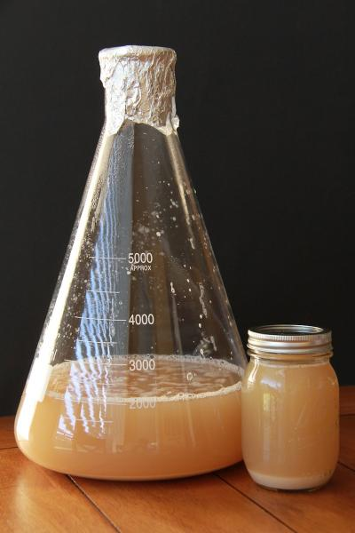 Yeast Harvesting: A Novel Approach? - Brulosopher - 4-235.jpg