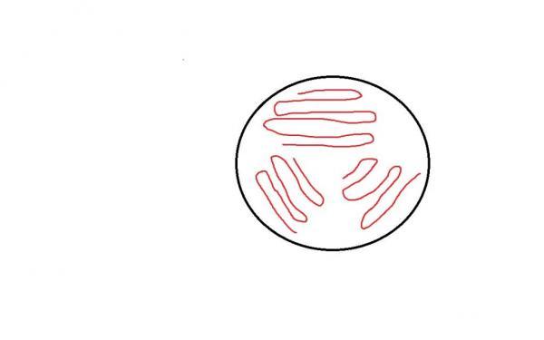 Plating Yeast & Selecting Colonies - jester5120 - 4-315.jpg