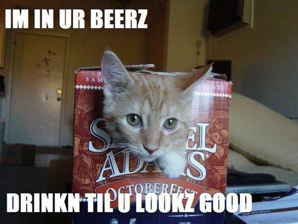 7176-beercatdrinkin1-13267
