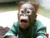 thumb1_surprised-monkey-20026