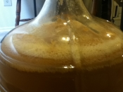 apricot-blonde-secondary