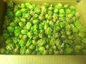 home-grown-hops