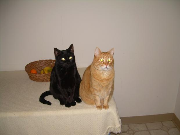 thumb2_cats-35171