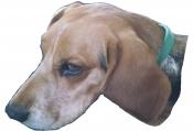 thumb1_horny-beagle-63497