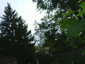 thumb1_hops_nugget_cones_2008-16439