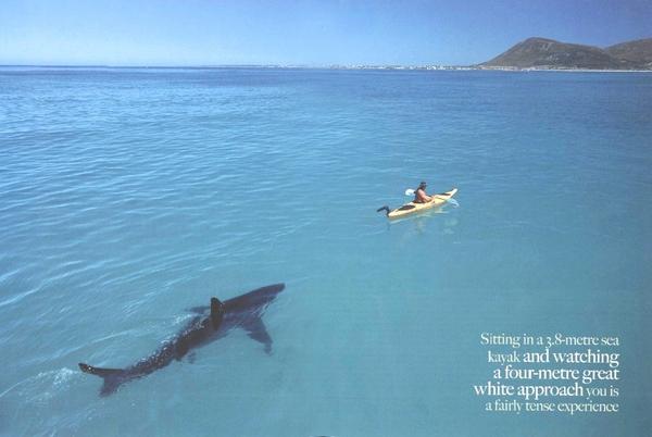 2086-shark-9490