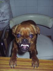 thumb1_angry-evil-dog-36344