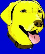 yellowdogbrewingcompanys-photos