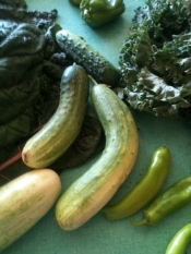 thumb1_mt-zion-cucumbers-july-15-2012-55707