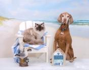thumb1_marlee-and-hershey---beach-2016-67840