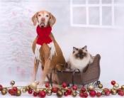 thumb1_marlee-and-hershey---christmas-2016-67841