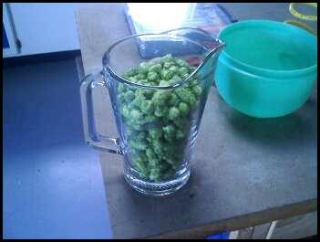 hops_pitcher-31766