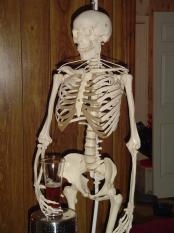 thumb1_skeleton_004-14511