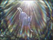 thumb1_sundog1-46011