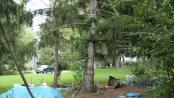 thumb1_tree_hops-50500
