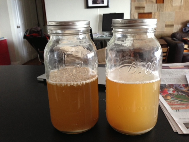Immobilized Yeast Experiment