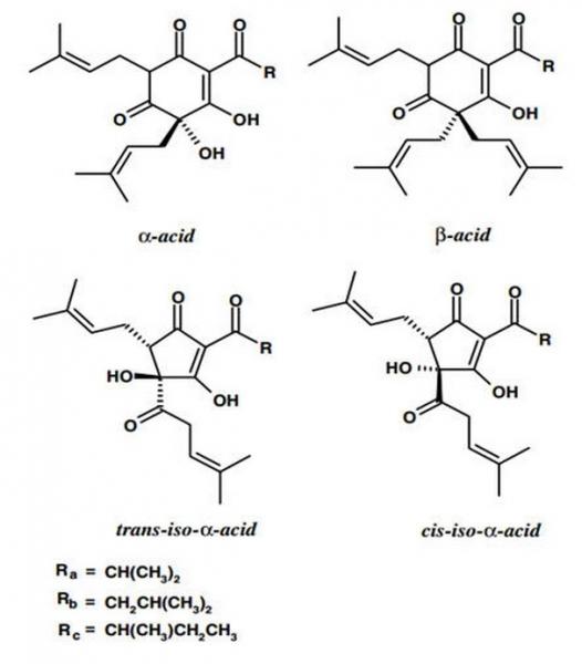 "Science on Tap - The Science of Beer Aging - Styles - Charlie ""ColoHox"" Hoxmeier - 2-2134.jpg"