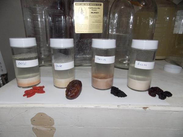 Collecting Wild Yeast - Jerrod Ritchie - dscn2597-1964.jpg