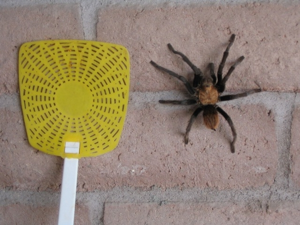 574-spider-10633