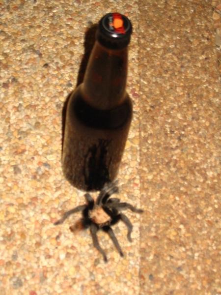 574-spiderbeer-7833