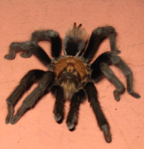 574-tarantula-7834