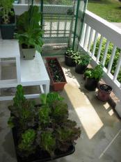 organic-plants
