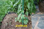 thumb1_santiam-48240