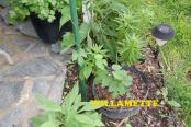 hops-garden