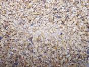 thumb1_6585-grain2-8769