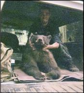 thumb1_bear1-47088