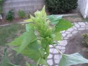 thumb1_img_20111024_144951-51097