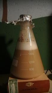 thumb1_starter_fermentation-30848