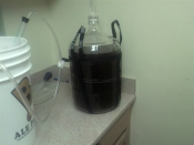 what-im-brewing